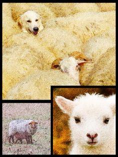 Spring 2015 sheep * ©LaSignoraMarinelli * www.la-signora-marinelli.de* Poster *