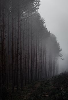 fog in the black forest - scary but beautyful