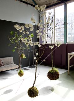 levitating flower trees in moss balls?