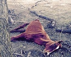Former AQHA Breeder Charged with Neglect in Oklahoma, 18 Horses Dead | Rate My Horse PRO