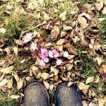Shoes - warten bis die Blumen blühen Hiking Boots, Photography, Waiting, Flowers, Walking Boots, Photograph, Fotografie, Hiking Shoes, Fotografia