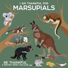 I Am Thankful For Marsupials by PepomintNarwhal Animals Of The World, Animals And Pets, Cute Animals, Fun Facts About Animals, Animal Facts, Reptiles And Amphibians, Mammals, Prehistoric Creatures, Australian Animals