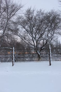 my horse pen in winter