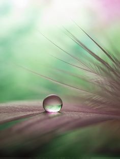 New Macro Nature Photography Flowers Dew Drops 53 Ideas Water Drop Photography, Nature Photography Flowers, Creative Photography, Art Photography, Exposure Photography, Levitation Photography, Wedding Photography, Foto Macro, Fractal