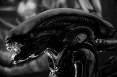 Everybody is curious if there were ever people who had spotted aliens for real. Specialists made a lot of presuppositions.