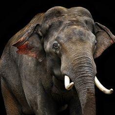 Elephant by Klaus Wiese