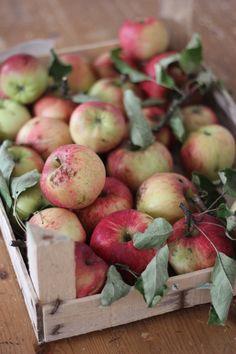 Delicious Fruit, Apple, Food, Coconut Flakes, Berries, Treats, Sunday, Apple Fruit, Essen