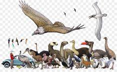 A size chart of the largest extinct Bird species Jurassic Park, Jurassic World, Extinct Birds, Extinct Animals, Prehistoric World, Prehistoric Creatures, Reptiles, Mammals, Primates