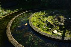Holland, Groningen, botanical garden Hortus Haren. Chinese garden. Stepping Stones, Holland, Outdoor Decor, The Nederlands, Stair Risers, The Netherlands, Netherlands