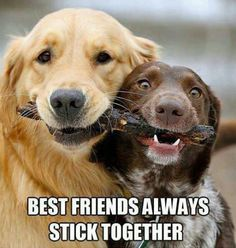 """Best friends always stick together.""  We need to work on our stick sharing skills.  Dog humor cute"