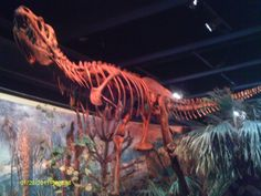 Where to Find Dinosaur Bones in Raleigh:  North Carolina Museum of Natural Science