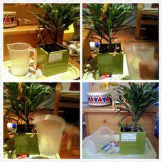 #30giornidimontessori Annaffiare le piante