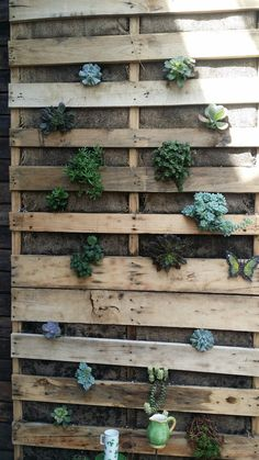 Succulents in pallets
