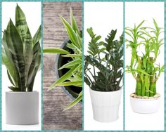 gardening pic   4 Hardy Hard-to-Kill Houseplants for Apartments with Low Light