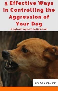 How To Train Your Dog To Walk On A Leash Without Pulling And How