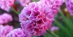 9 kerti virág, amit napos helyre is ültethetsz és még locsolni sem kell! Garden, Flowers, Plants, Garten, Lawn And Garden, Gardens, Plant, Gardening, Royal Icing Flowers