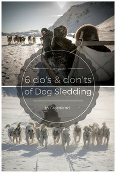 Some useful things to know when Dog Sledding in Greenland.