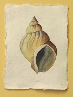 Sea shell whelk original watercolour illustration painting beach ocean coastal collection. £30.00, via Etsy.