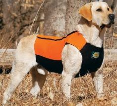 best vest for when it's hunting season.. completely cutsomizable for your dog!