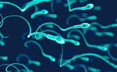 Les principales causes de l'infertilité masculine - L'Elégance