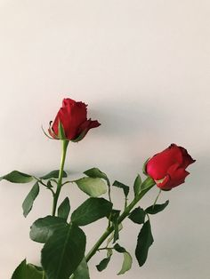 New post on senden-kalanlarimla-yalnizim Belle Aesthetic, Flower Aesthetic, Red Aesthetic, Aesthetic Pictures, Pastel Red, Pastel Goth, Plants Are Friends, Arte Floral, Red Roses
