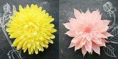 tiffanieturnerfallflowers.jpg (850×425)