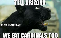 Playoff Game 2: Panthers vs Cardinals Panthers Memes, Panthers Football, Broncos, Panthers Vs, Football Quotes, Funny Football, Nfl Highlights, Panther Nation, How Bout Them Cowboys