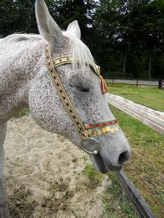 Pretty bridle on beautiful horse