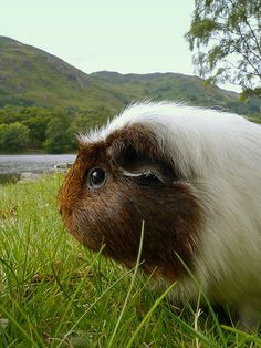 Malcolm at Loch Earn 1, 27 Aug 14