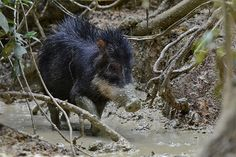 Over 700 species added to the threatened categories on the IUCN Red List (photos) » Focusing on Wildlife