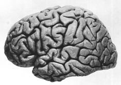 human brain, lateral view, from Le Cerveau de Joseph Pilsudski, by Maximilien Rose, 1938