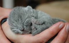 This is truly sweet photo of such smallest kitten & love the color too. How small to fit into you palm! #cute #kittens