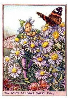 Michaelmas Daisy Fairy Illustration for the Michaelmas Daisy Fairy from Flower Fairies of the Autumn. A boy fairy stands amongst Michaelmas daisy flowers talking to a Red Admiral butterfly which is perched nearby.