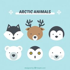 Cute Arctic Animals to draw Arctic Animals, Cute Animals, Draw Animals, Arte Country, Affinity Designer, Animal Faces, Animal Party, Animal Design, Cute Illustration