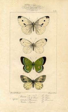 Natural History Printable Imagem - traças - borboletas - A fada dos gráficos