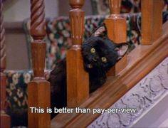 As 13 vezes que Salem, o gato da Sabrina, resumiu a vida