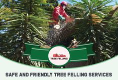We have decades of experience and know which safety precautions to take to ensure the safety of people and buildings.  Contact us on 0861 708 000 or (011) 708-0088 or brandstf@mweb.co.za / office@brandstreefelling.co.za  Our Tree Felling teams are equipped with all of the necessary PPE and sanitising equipment.  #treefelling #dangeroustreeremoval #fallentreeremoval #essentialservicespermit #treefellingsolutions #brandstreefelling