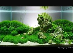Interior Design: Aquascape. Beautiful planted aquarium