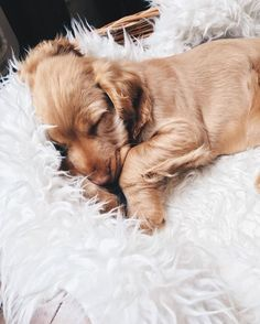 ♕pinterest/amymckeown5 Always keep your pet Delighted & Healthy Win a $1000 Gift Card - FREE Pet Meals for one year! Claim Your Gift Card NOW! http://DogsDogsBaby.us/GiftCard