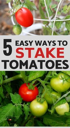The 5 Best Ways to Stake Your Tomatoes Vegetable Garden For Beginners, Backyard Vegetable Gardens, Veg Garden, Garden Pests, Gardening For Beginners, Planting Vegetables, Planting Seeds, Tips For Growing Tomatoes, Grow Tomatoes