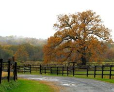 Homestead Land: What to Look for when Buying Land and Moving to the Country