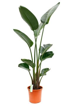 Faux Plants, Potted Plants, Indoor Plants, House Plants, Planting Flowers, Stuff To Do, Plant Leaves, Sweet Home, Planters