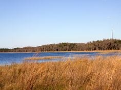 Lake Louisa State Park is located in Clermont Florida. With 23 miles of multi-use trails with fun ups and downs, it is great place for mountain biking.