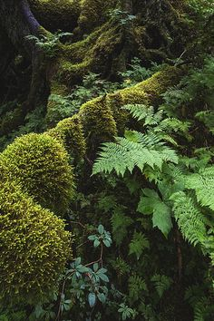 Forest Study Diverse textures and shades of green in a moss-laden forest near Portage Glacier, Alaska