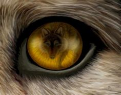 A wolf in the eye of a wolf's eye.