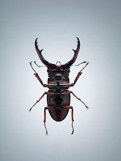CEREAL VOL.III Entomophagy by Jonathan Gregson