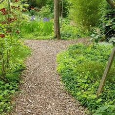 Small Backyard Gardens, Backyard Landscaping, Wooded Backyard Landscape, Large Backyard, Sloped Garden, Garden Beds, Front Yard Plants, Farmhouse Garden, Woodland Garden