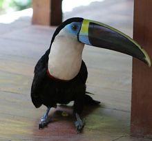 enjoy the birds in the Peruvian jungle,in a private tour