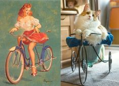 Cats do it better! Part 4 Bike 1