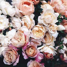 Jacin Fitzgerald (Floral Designer): Roses
